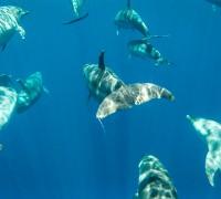 Dolphins-everywhere